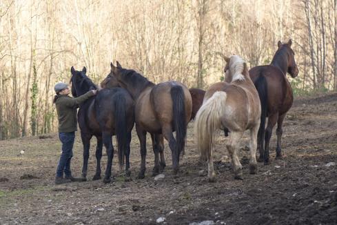 cavalli improntamica