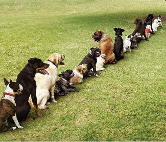 dogs_are_lining_up